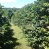 Green Lane Coffee