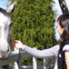 Horse Riding in the Scenic Rim